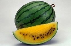ГМО семена, генетически модифицированные организмы, вред, мутации, продукты, я - Рус