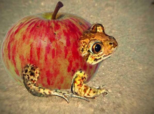 Что такое ГМО и зачем его едят